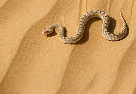 serpente deserto