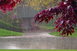pioggia-odore-olfatto-1