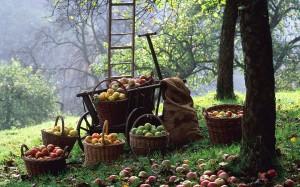 frutteto mele